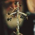 Свети Григориј Богослов: Зошто ние...