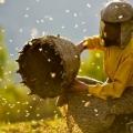 Жаклин Бат: Како од спалените степи да  влезе во медена земја